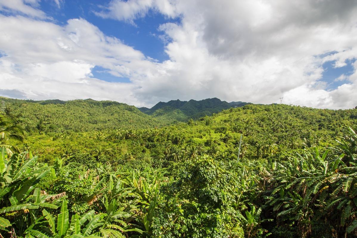 フィリピン・レイテ・ジャングル